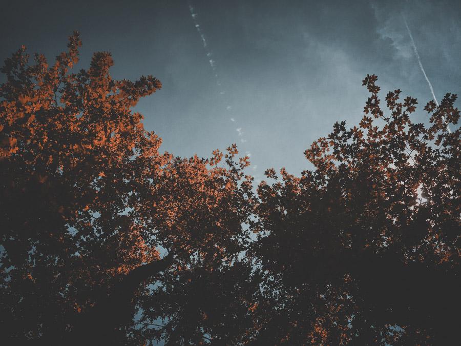 フリー写真 木の枝葉と飛行機雲の風景