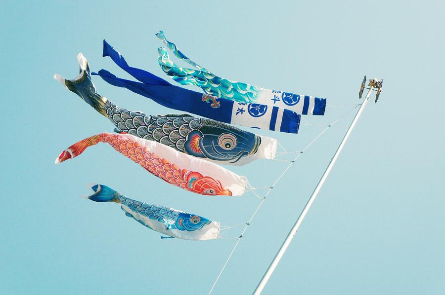 フリー写真 青空を泳ぐ鯉のぼり