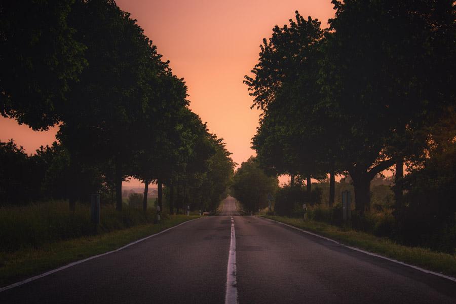 フリー写真 ドイツの夕暮れの並木道の風景