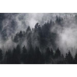 フリー写真, 風景, 自然, 霧(霞), 山, 樹木
