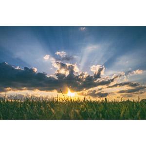 フリー写真, 風景, 植物, 牧草地, 朝, 朝日, 太陽光(日光), 薄明光線, 雲