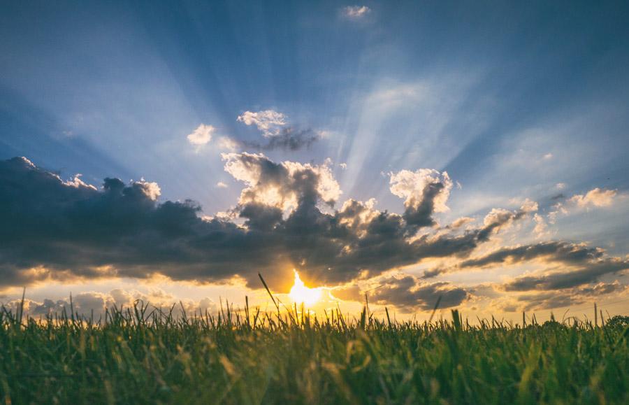 フリー写真 牧草と朝日の風景