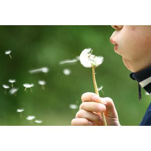 フリー写真, 人物, 子供, 息を吹く, 植物, 蒲公英(タンポポ), 綿毛