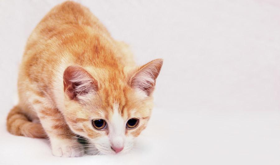 フリー写真 目を大きくして何かを狙っている猫