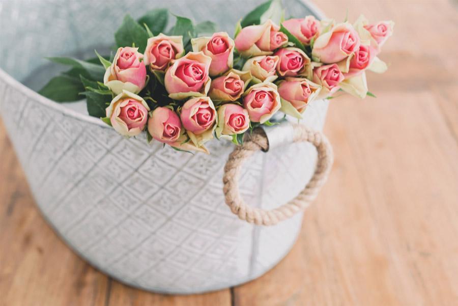 フリー写真 ピンク色の蕾の薔薇