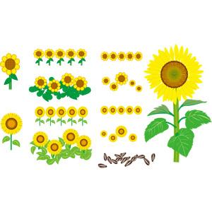フリーイラスト, ベクター画像, AI, 植物, 花, 向日葵(ヒマワリ), ヒマワリの種, 黄色の花, 夏