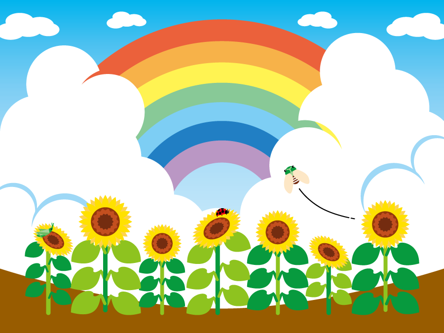 フリーイラスト ひまわり畑と虹の風景