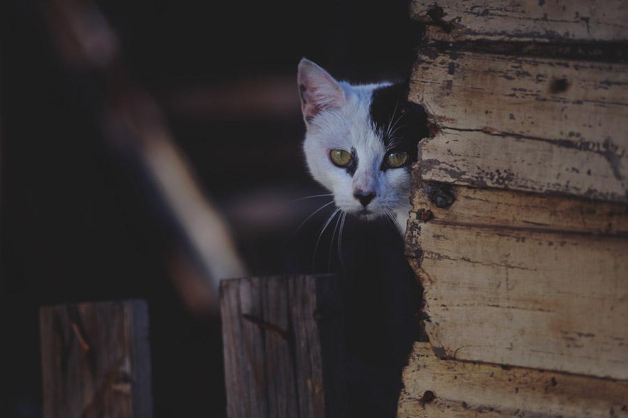 フリー写真 壁に隠れて覗いている白黒猫