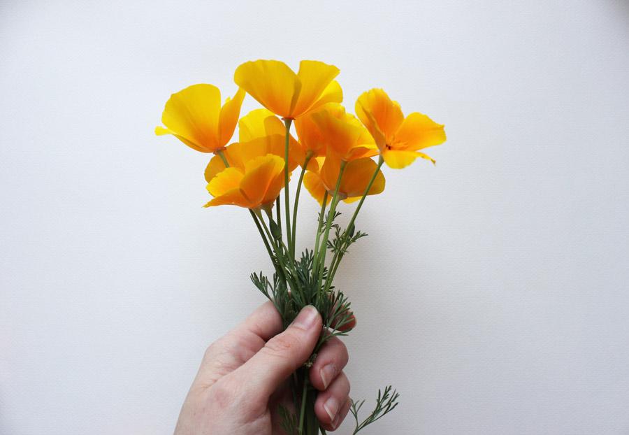フリー写真 手に持つハナビシソウの花束