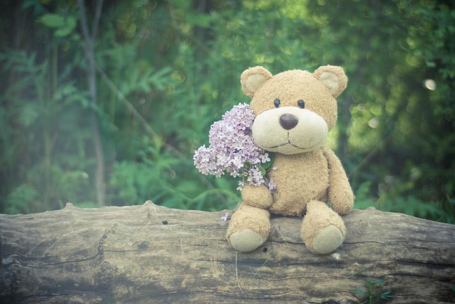 フリー写真 花束を抱えるテディベア