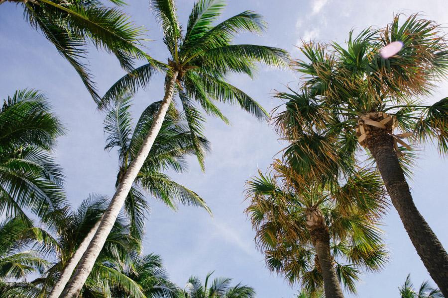 フリー写真 下から見上げるヤシの木々の風景