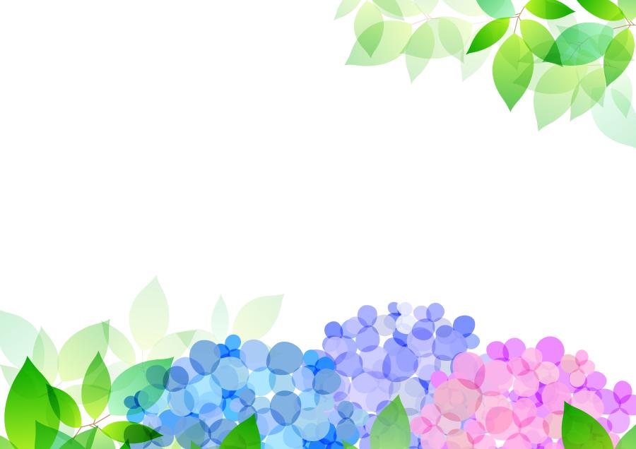フリーイラスト 紫陽花と新緑の葉の背景