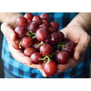 フリー写真, 人体, 手, 食べ物(食料), 果物(フルーツ), 葡萄(ブドウ)