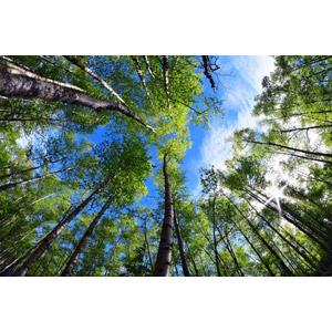 フリー写真, 風景, 自然, 樹木, 森林