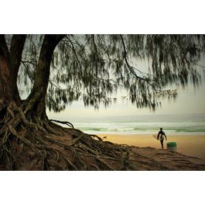 フリー写真, 風景, 樹木, ビーチ(砂浜), 海, 人と風景, サーファー, ブラジルの風景