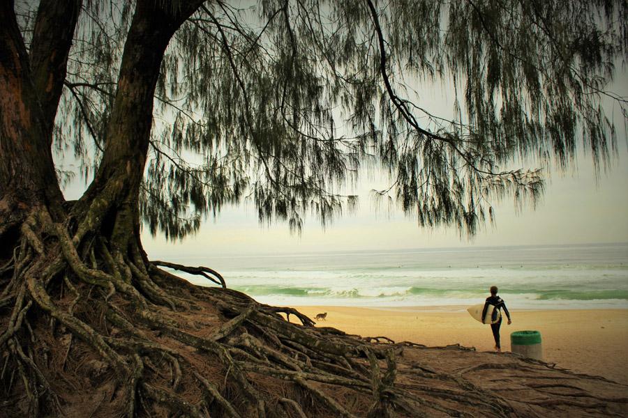 フリー写真 木とサーフボードを担ぐサーファー