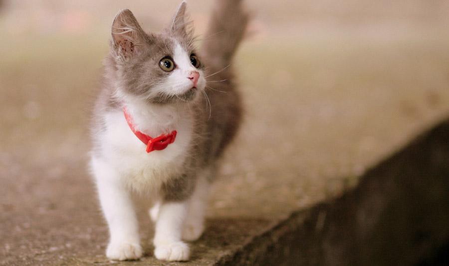 フリー写真 かわいい子猫