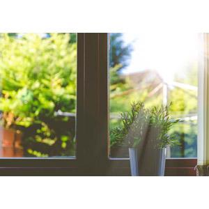 フリー写真, 植物, 観葉植物, 窓辺, 太陽光(日光)