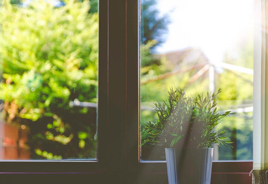 フリー写真 窓辺の観葉植物と射し込む太陽の光