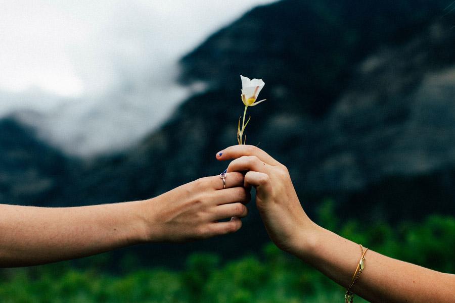 フリー写真 一輪の花をプレゼントする手