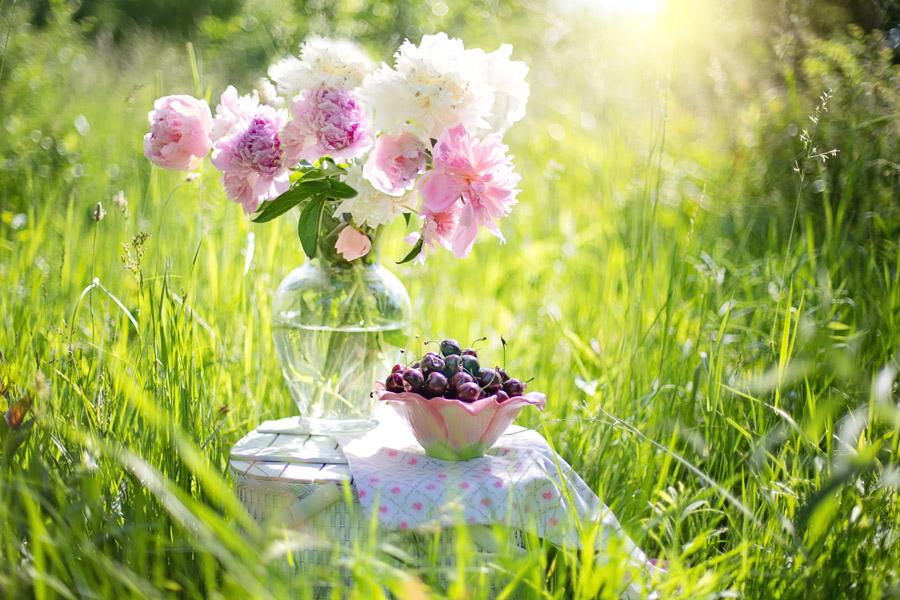 フリー写真 草むらと花瓶の花とさくらんぼ
