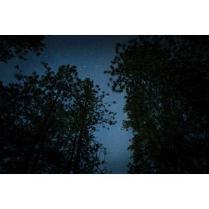 フリー写真, 風景, 自然, 夜, 夜空, 星(スター), 樹木