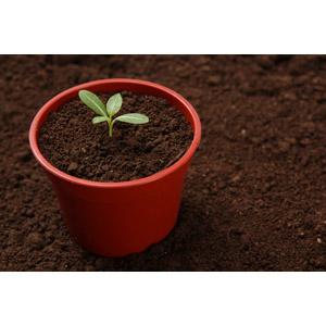 フリー写真, 植物, 新芽, 土, 植木鉢