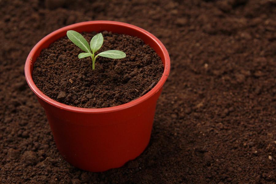 フリー写真 植木鉢の中の新芽
