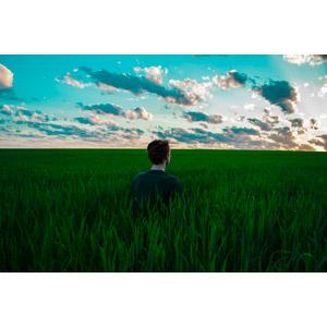 フリー写真, 人物, 男性, 後ろ姿, 牧草地, 草原, 植物, 人と風景, 朝, 雲, 眺める