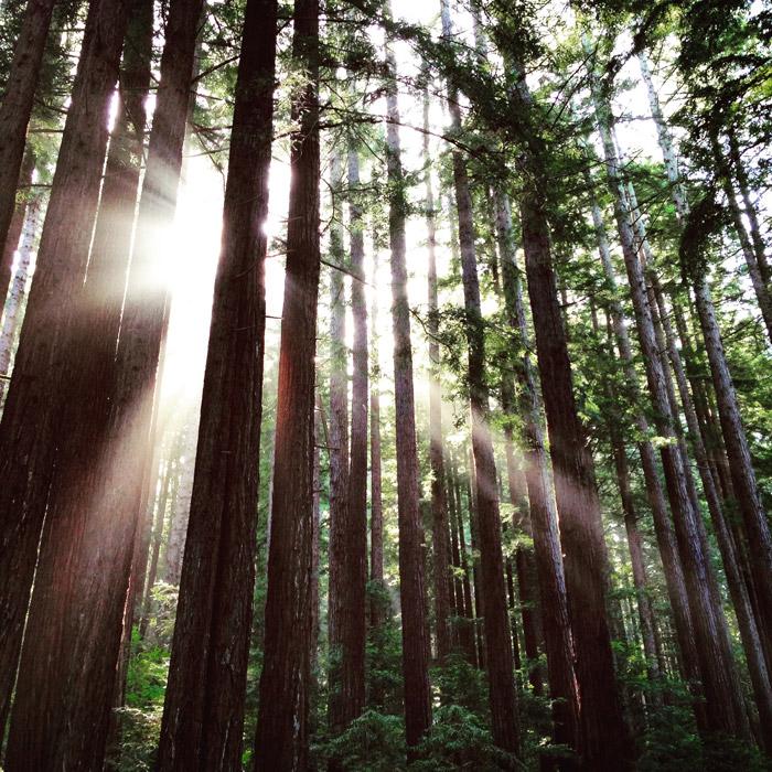 フリー写真 森の木々と木漏れ日の風景