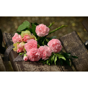 フリー写真, 植物, 花, 薔薇(バラ), ピンク色の花, 花束