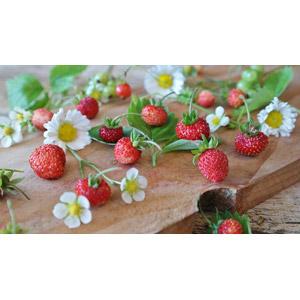 フリー写真, 食べ物(食料), 果物(フルーツ), 苺(イチゴ), 植物, 花, ヒナギク(デージー), 白色の花