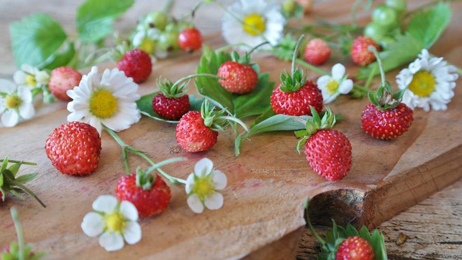 フリー写真 イチゴとヒナギクの花