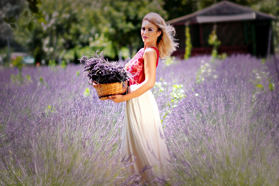 フリー写真 ラベンダー畑に立つ外国人女性