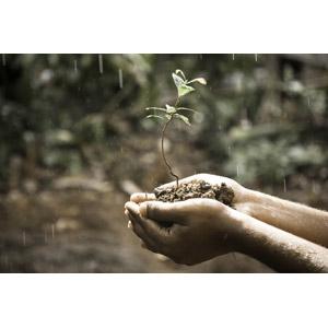 フリー写真, 植物, 新芽, 雨, 人体, 手