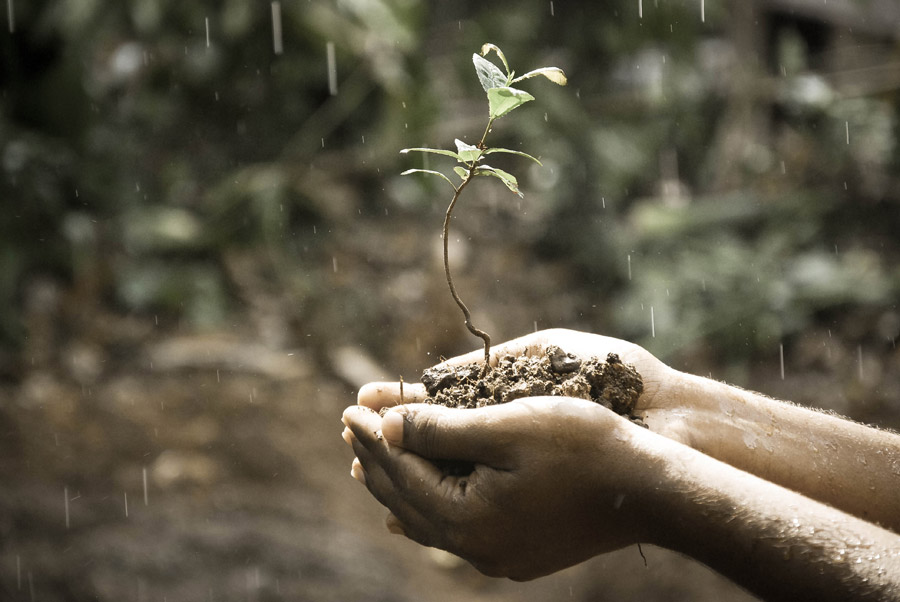 フリー写真 雨と手の中の新芽