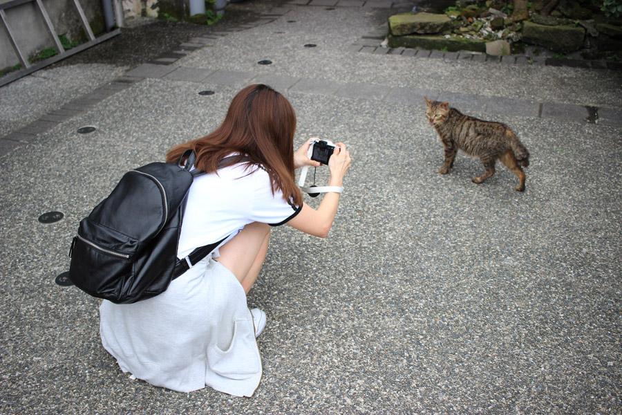 フリー写真 猫の写真を撮る女性