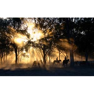 フリー写真, 風景, 森林, 朝日, 朝, 太陽光(日光), 木漏れ日, 霧(霞), 乗馬, 牧畜, 人と風景, 人と動物