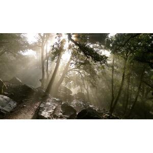 フリー写真, 風景, 自然, 森林, 太陽光(日光), 木漏れ日, 岩, ヨセミテ国立公園, カリフォルニア州, アメリカの風景, 世界遺産