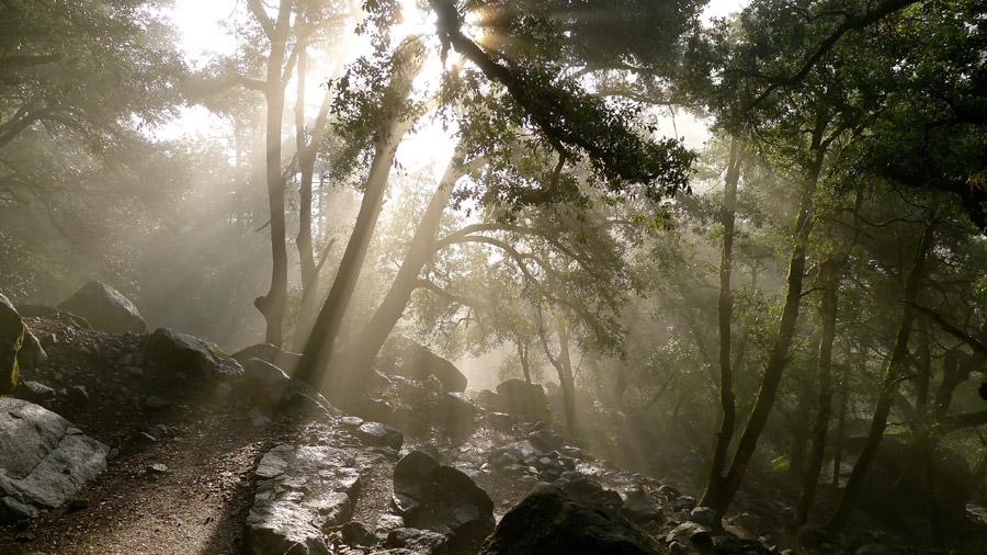フリー写真 木漏れ日と岩の多い森の風景