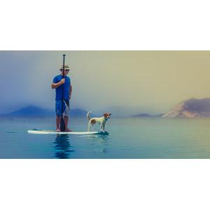 フリー写真, スポーツ, ウォータースポーツ, スタンドアップパドル・サーフィン, 人と動物, 人と風景, 海, 動物, 哺乳類, 犬(イヌ)