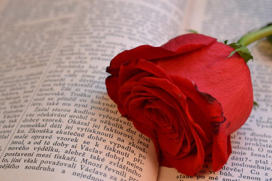フリー写真 本の上に置かれた薔薇の花