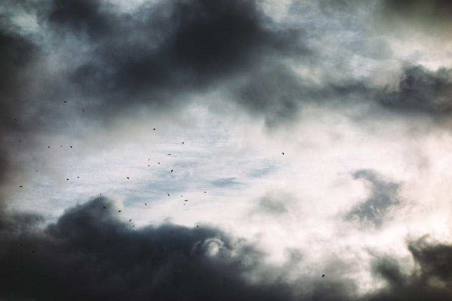 フリー写真 鳥が飛び交う不気味な空の風景