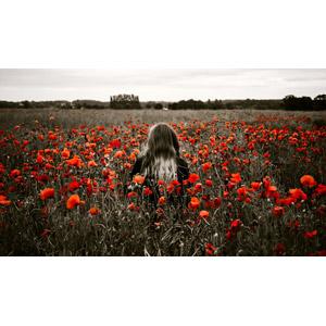 フリー写真, 人物, 女性, 外国人女性, 後ろ姿, 人と花, 人と風景, 植物, 花, ヒナゲシ(ポピー), 赤色の花