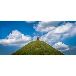 フリー写真, 動物, 哺乳類, 羊(ヒツジ), 丘, 青空, 雲