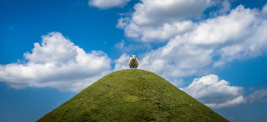 フリー写真 青空と丘の上の羊