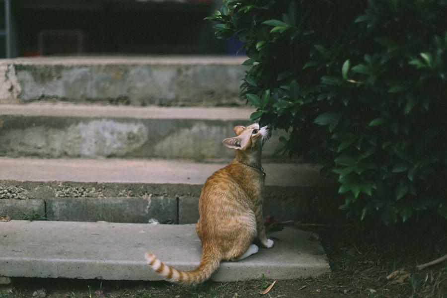 フリー写真 葉っぱの匂いを嗅ぐ猫