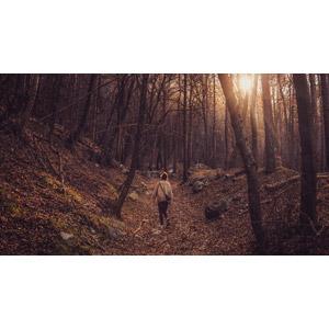 フリー写真, 人物, 女性, 外国人女性, 後ろ姿, 人と風景, 森林, 樹木, 木漏れ日, 太陽光(日光)