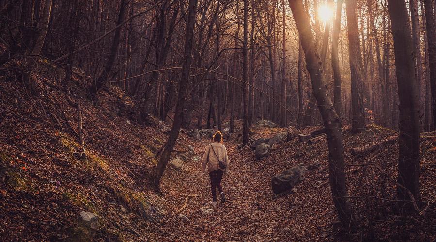 フリー写真 森の中を彷徨う女性の後ろ姿