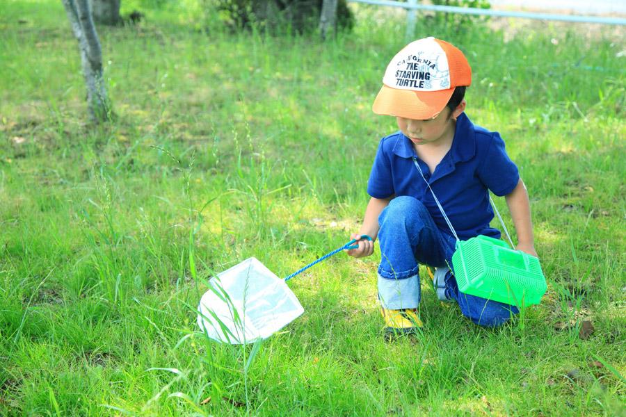 フリー写真 虫取り網で昆虫採集している男の子